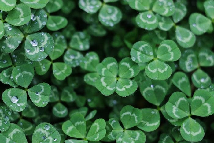 St. Patrick's Day Lore, Traditions, FAQs, and Facts