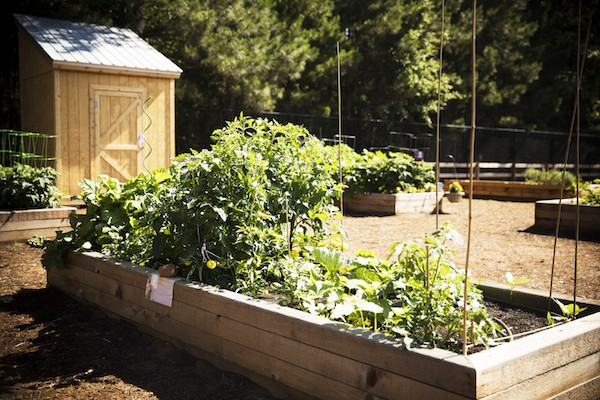 Community Gardens: Benefits You Should Know